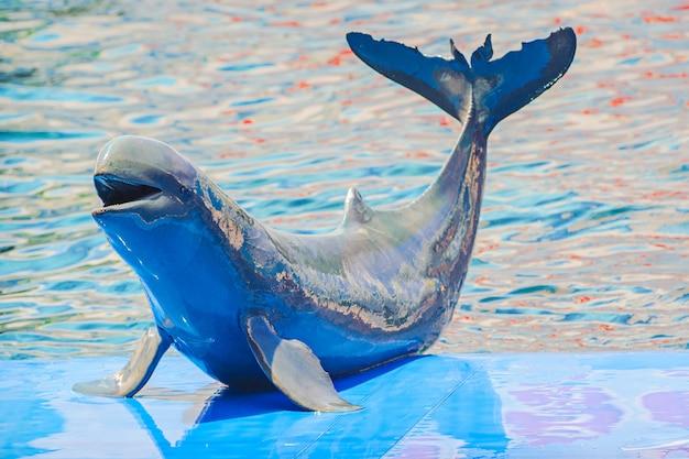 Bébé dauphins jouant Photo Premium