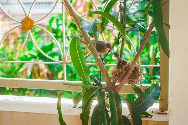 Bébé Oiseau Au Nid Chez Les Gens. Photo Premium