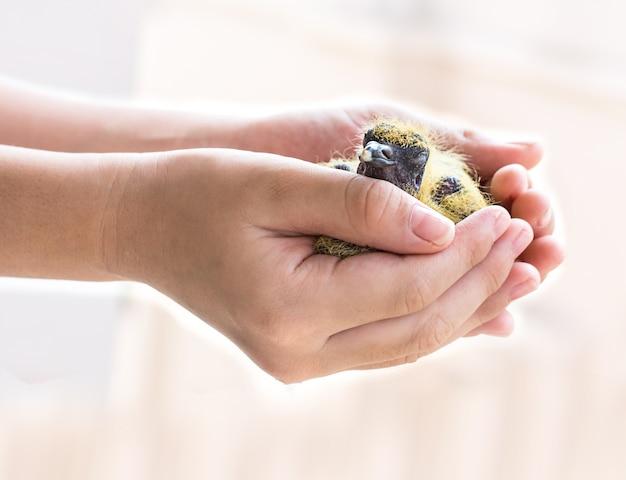 Bébé Oiseau Dans La Main De L'enfant Photo Premium