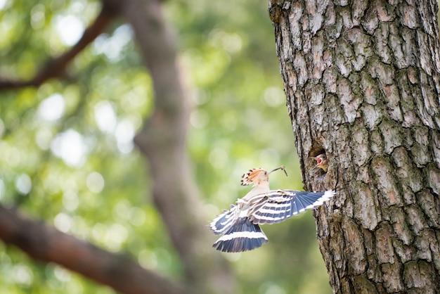 Un bébé oiseau sur un tronc d'arbre Photo Premium