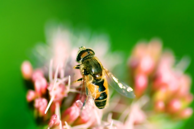 Bee Close Photo gratuit