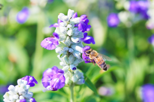 Bee fleur pollinisatrices Photo gratuit