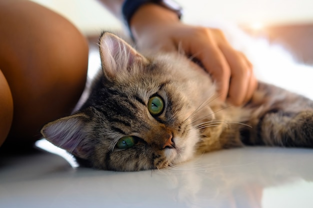 Bel animal dans une main humaine avec gros plan. Photo Premium