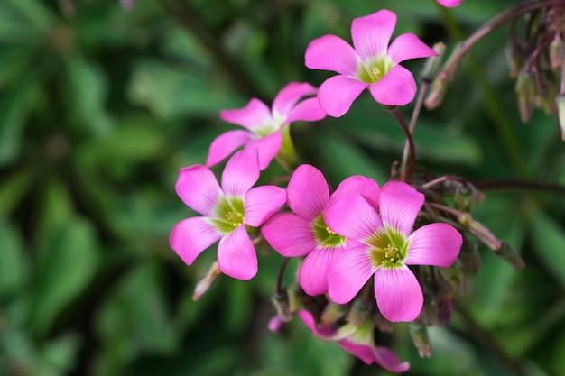 Bel été fleurs roses Photo Premium