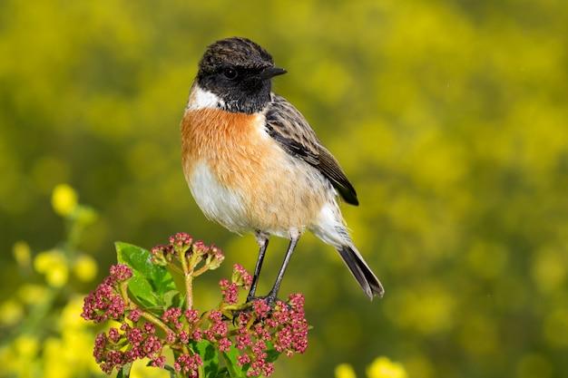 Bel oiseau sauvage perché sur une branche Photo Premium