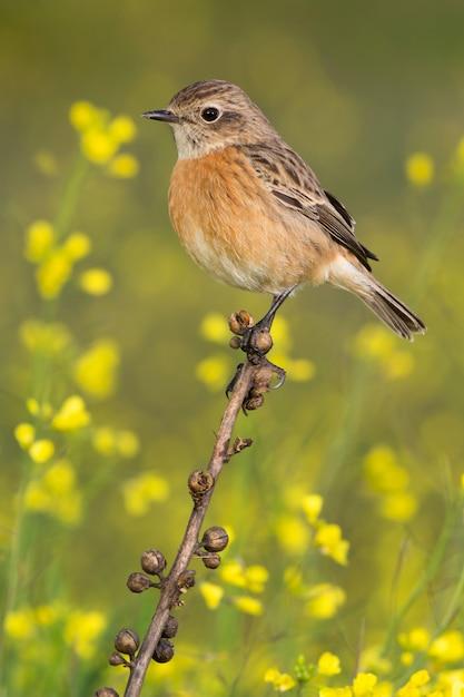 Bel oiseau sauvage Photo Premium