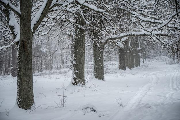 Belle Allée D'hiver. Parc Des Arbres Couverts De Neige. Un Chemin Entre Les Arbres Couverts De Neige Photo Premium