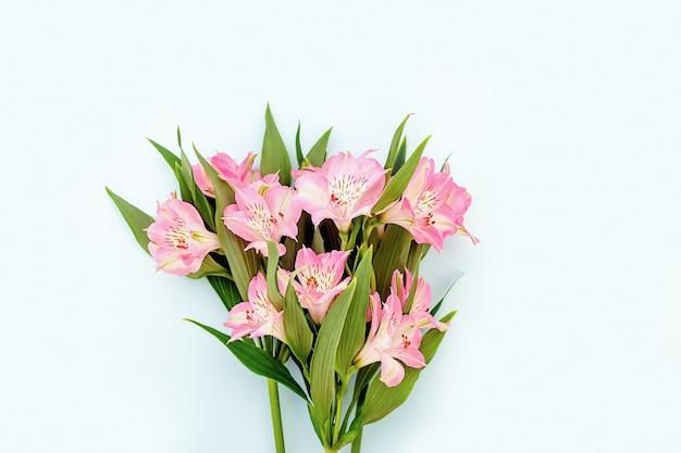 Belle Alstroemeria Rose Au Printemps Et En été Pour La Conception Sur Le Fond Bleu. Photo Premium