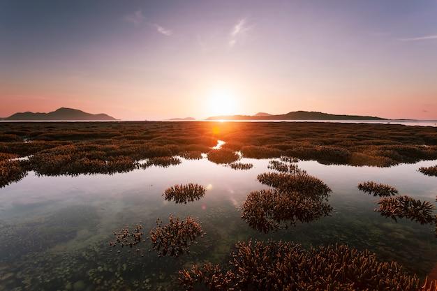 Belle barrière de corail à la marée basse eau dans la mer belle lumière lever du soleil sur la mer Photo Premium