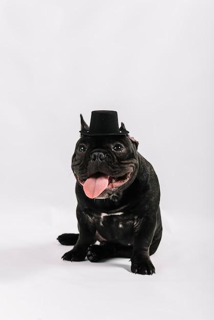 Belle composition d'animaux avec bouledogue Photo gratuit