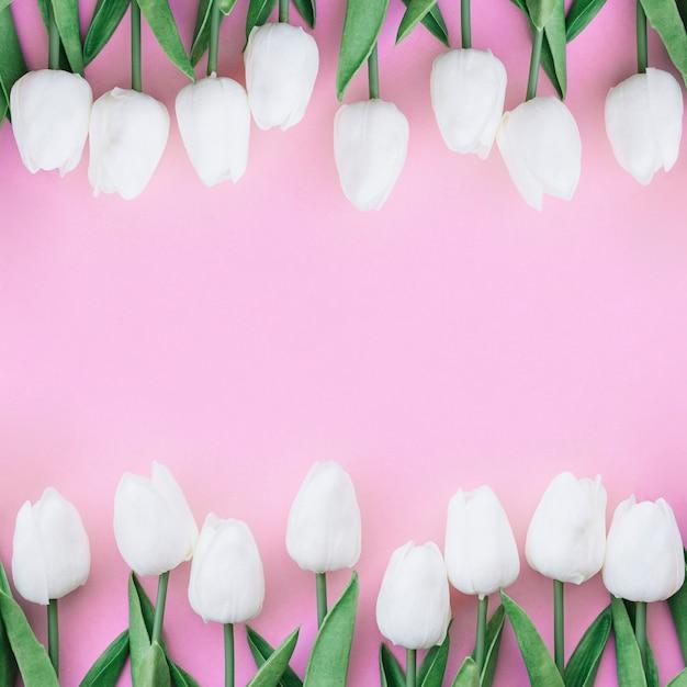 Belle composition symétrique avec des tulipes blanches sur fond rose pastel Photo gratuit