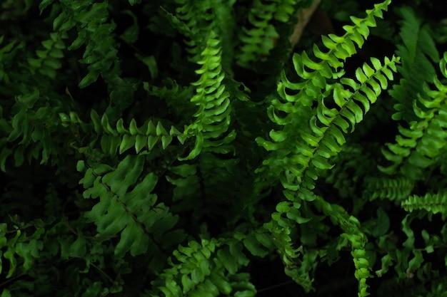 Belle feuille de fougère verte. buisson de fougère. nuit Photo Premium