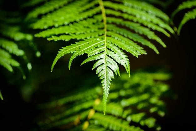 Belle feuille de fougère verte Photo Premium