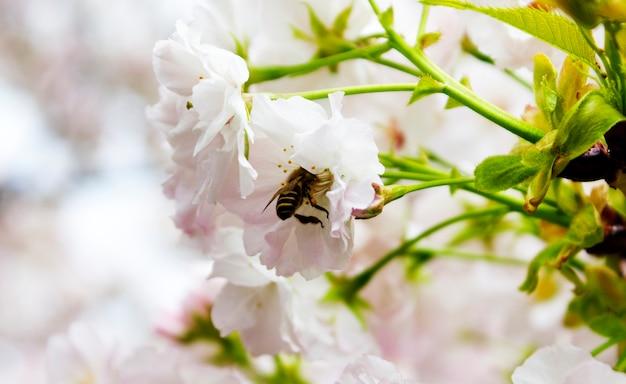 Belle fleur abeille widlife style de vie naturel Photo gratuit