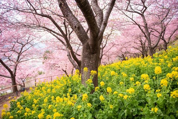 Belle fleur de cerisier à matsuda, japon Photo Premium