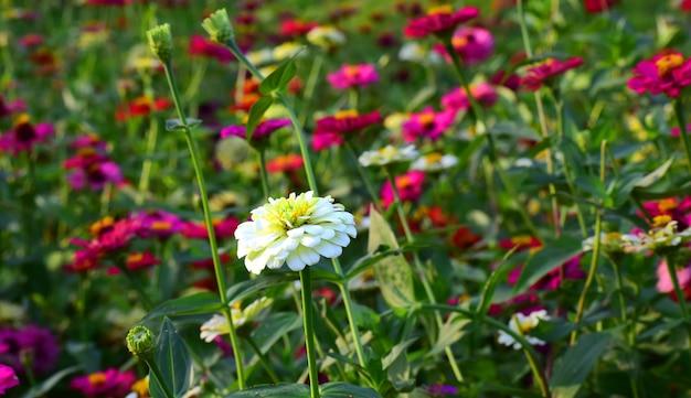 Belle Fleur Dans L'arrière-cour Est Rafraîchissante Photo Premium