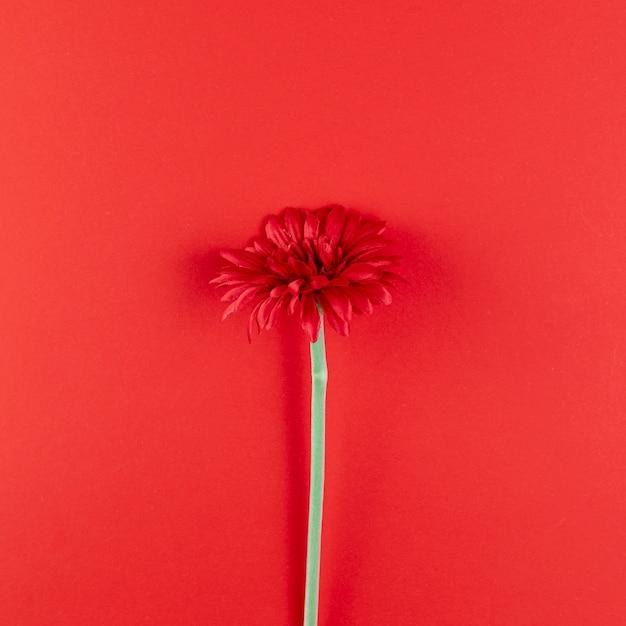 Belle fleur sur fond rouge Photo gratuit