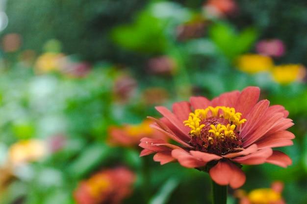 Belle Fleur De Jardin Avec De Nombreuses Fleurs Différentes Floues En Arrière-plan Photo Premium
