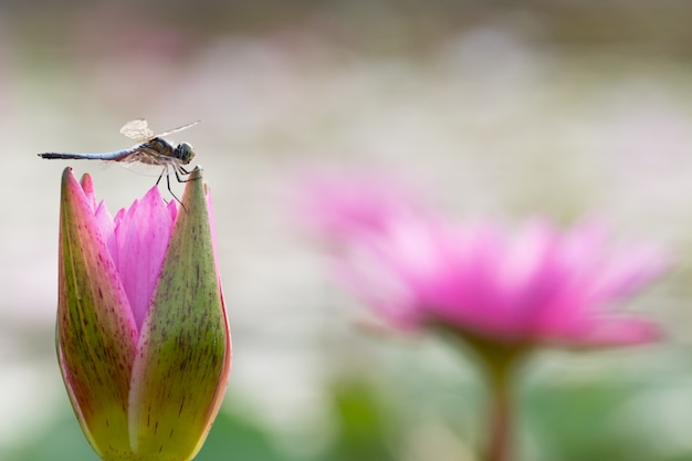Belle fleur de nénuphar dans l'étang Photo Premium