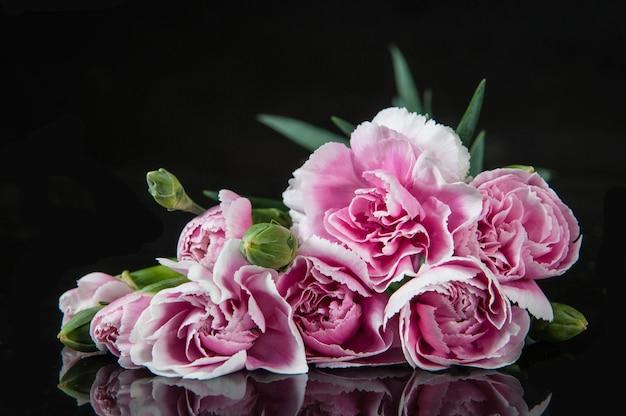 Belle fleur d'oeillets en fleurs sur un fond noir Photo Premium