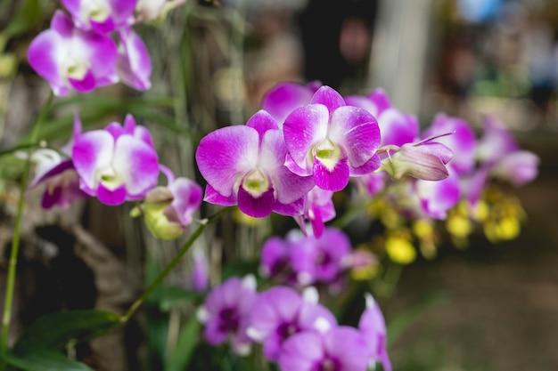 Belle fleur d'orchidée se bouchent Photo Premium