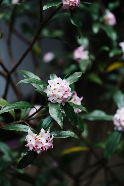 Belle fleur pétale rose dans le jardin Photo gratuit