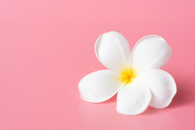 Belle fleur de plumeria blanche rose Photo Premium