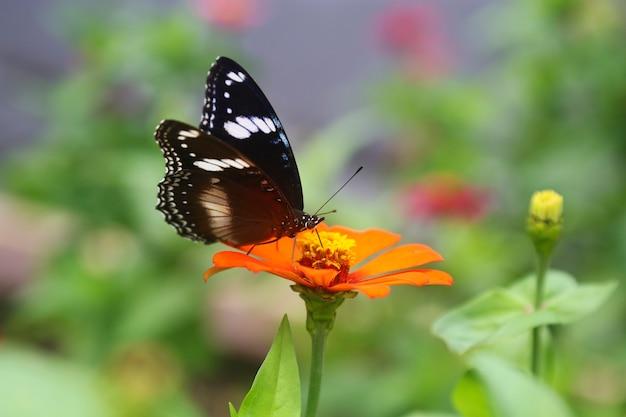 Belle fleur de printemps avec papillon Photo Premium