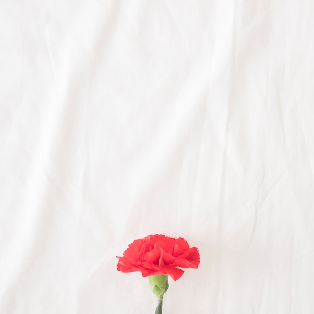 Belle fleur rouge sur tige verte Photo gratuit