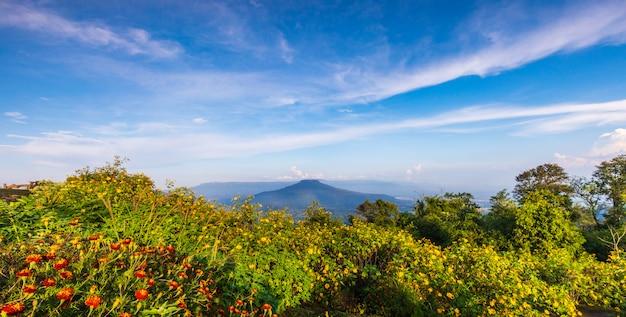 Belle fleur sur la thailande Photo Premium