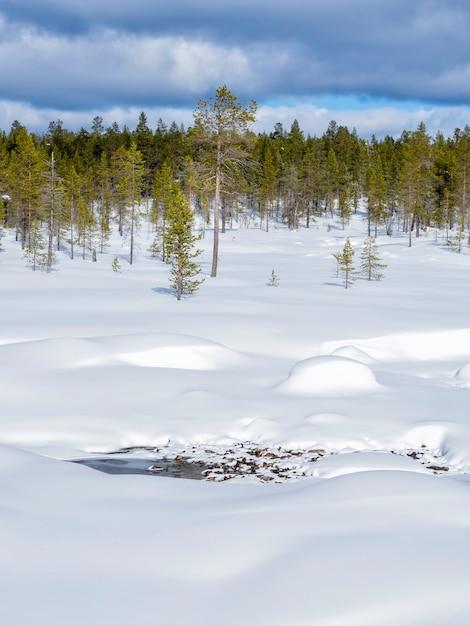 Une belle forêt d'hiver recouverte de neige en finlande Photo Premium