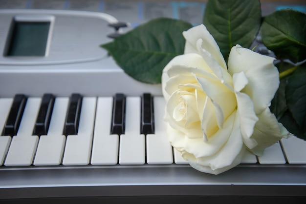 """Résultat de recherche d'images pour """"fleurs rose blanche sur musique"""""""