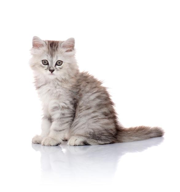 Belle jeune chaton à fourrure isolé sur blanc Photo Premium