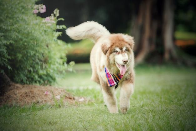 Belle jeune femme qui court avec son petit chien dans un parc en plein air. portrait de mode de vie. Photo gratuit