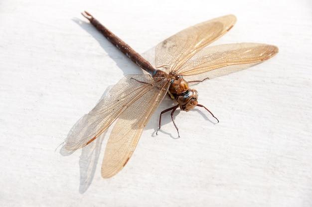 Une belle libellule se prélassant au soleil Photo Premium