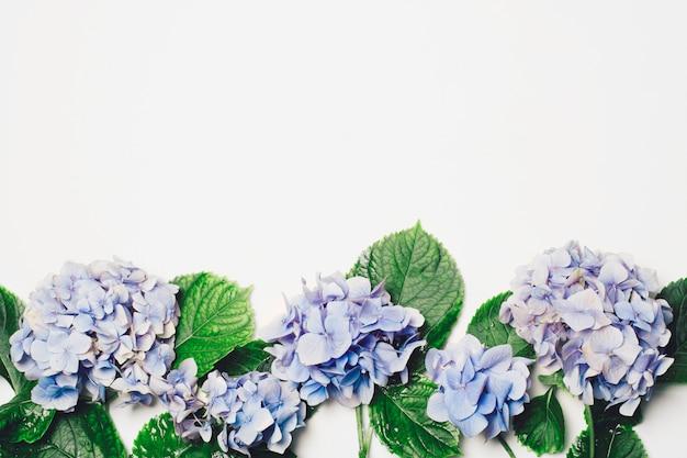 Belle lilas bleu avec des feuilles vertes Photo gratuit
