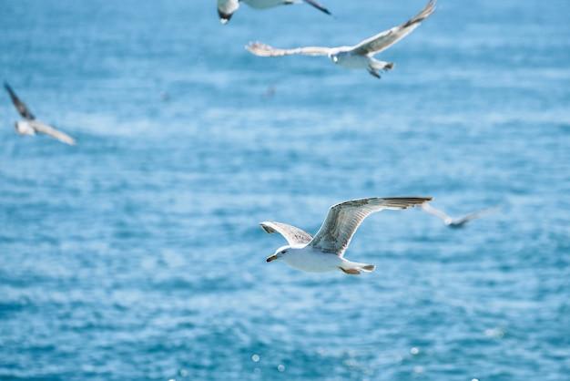 Belle mouette volant dans les airs Photo Premium