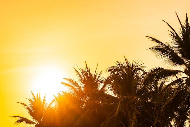 Belle nature en plein air avec ciel et coucher de soleil ou lever de soleil autour de cocotier Photo gratuit