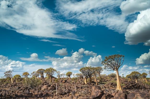 Belle Photo D'une Forêt D'arbres Carquois En Namibie, Afrique Avec Un Ciel Bleu Nuageux Photo gratuit
