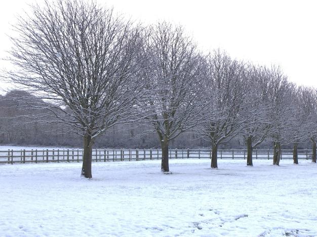 Belle Photo En Niveaux De Gris D'arbres Nus Bordés Sur Un Sol Couvert De Neige En Hiver Photo gratuit