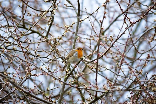 Belle Photo D'un Oiseau Robin Européen Reposant Sur La Branche Photo gratuit