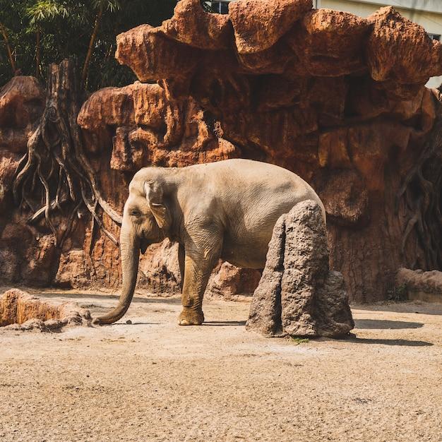 Belle Photo D'un Petit éléphant Mignon Sous Un Soleil Photo gratuit