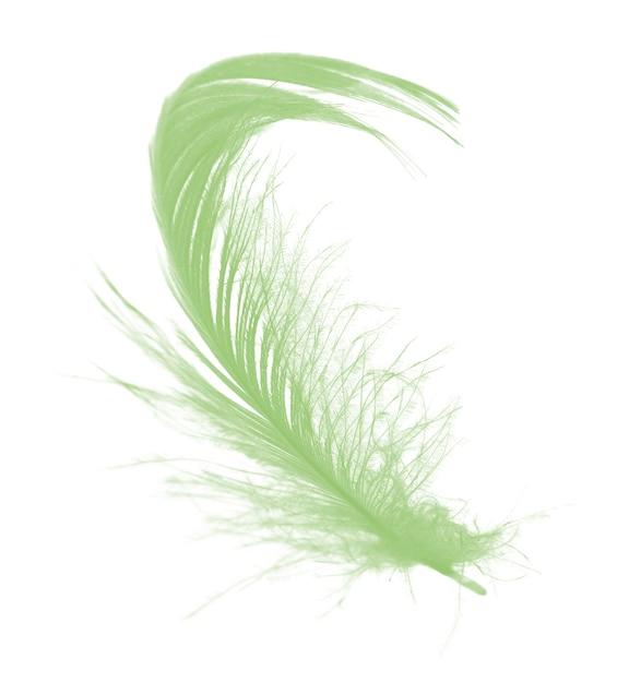 Belle plume verte isolée sur fond blanc Photo Premium
