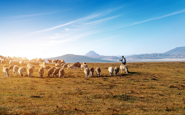 Belle prairie et troupeau Photo Premium