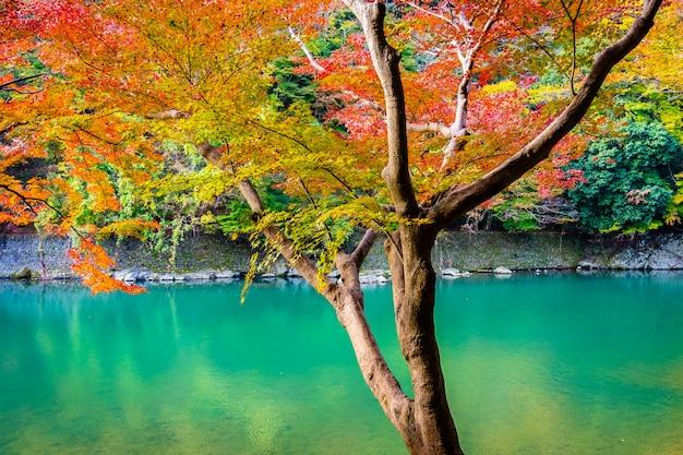 Belle Rivière Arashiyama Avec Feuille D'érable Et Bateau Autour Du Lac Photo gratuit