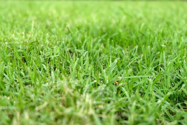 Belle texture d'herbe verte Photo Premium