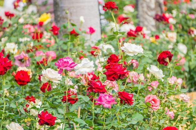 Belle variété de fleurs roses dans le jardin | Télécharger ...