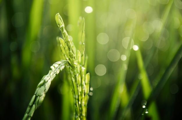 Belle verdure Photo gratuit