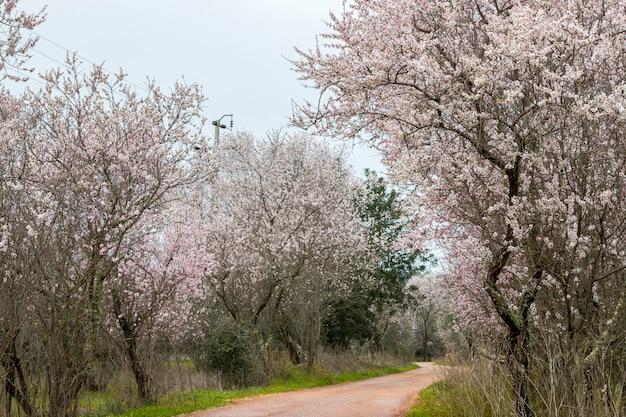 Belle vue d'amandiers en pleine floraison dans la nature. Photo Premium
