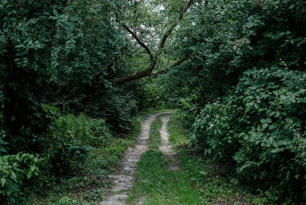 Belle Vue Sur Un Chemin Herbeux Entouré De Plantes Et D'arbres Photo gratuit